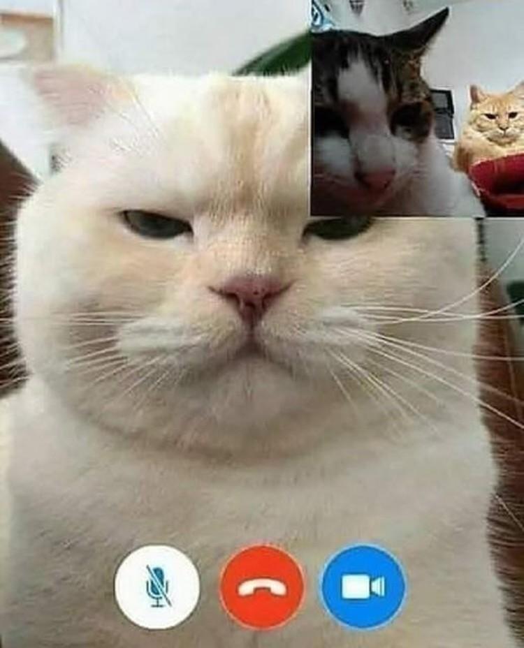 Ada saja editan foto nakal kucing berseliweran di jagat maya. Berikut ini di antaranya.