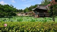 Potret Keindahan Provinsi Gangwon di Korea Selatan