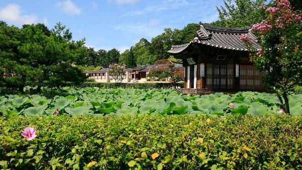 Provinsi Gangwon menawarkan banyak destinasi wisata buat wisatawan yang mau liburan ke Korea Selatan. Soal budaya Korea, traveler bisa menyelaminya di Gangneung Seongyojang House yang masih tradisional ini.