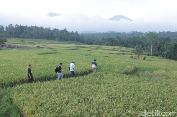 Taman Langit menawarkan panorama khas pedesaan yang dipadukan dengan hamparan sawah terasering dan pemandangan pegunungan Ijen.