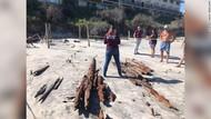 Badai Bikin Bangkai Kapal Tahun 1800-an Muncul ke Permukaan