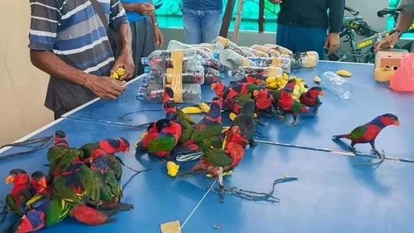 Polisi di kota Fakfak mengatakan awak kapal melaporkan mendengar suara-suara aneh yang berasal dari sebuah kotak besar. Ternyata ditemukan 74 ekor burung nuri kepala hitam, sayangnya 10 ekor diantaranya sudah mati. Istimewa/Facebook/Tamizhar Media