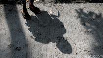 Hi... Jejak Kaki Macan Nampang di Jalur Evakuasi Merapi