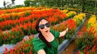 Celebrity on Vacation: Main ke Kebun Bunga Argowisata Banyuwangi