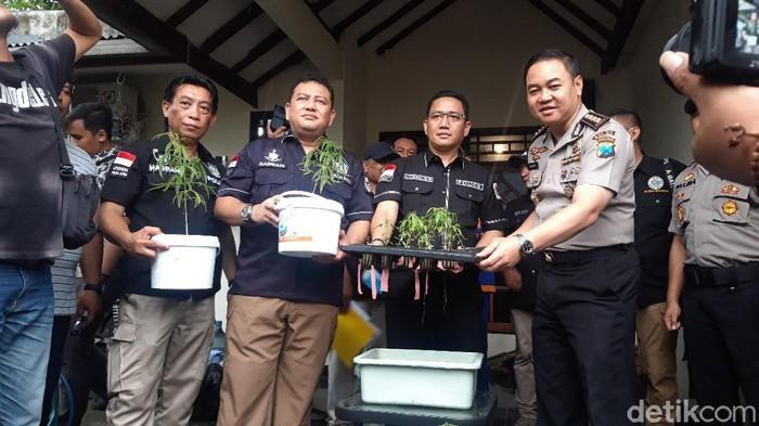 Aparat kepolisian memperlihatkan ganja hidroponik yang ditanam Ardian.