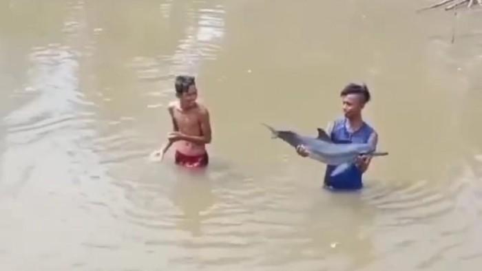 Lumba-lumba di sungai Krueng Musa, Aceh Timur (Dok. Screenshot video).