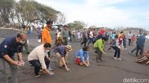 1.000 Tukik Dilepas di Pantai Trisik