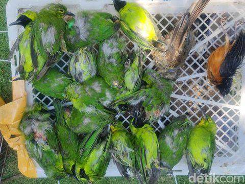 Ratusan Burung Dilindungi diselundupkan dalam Kardus