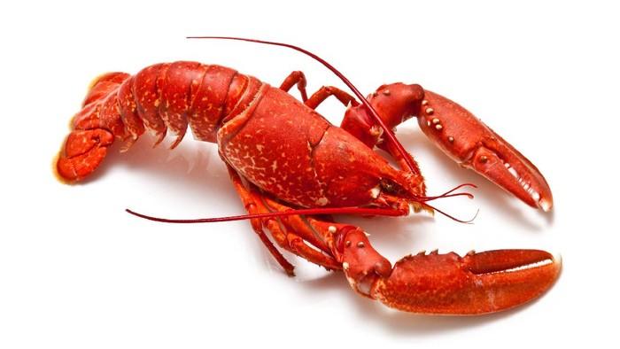 Foto: Getty Images/iStockphoto/onepony/Cara Budidaya Lobster Air Tawar bagi Pemula