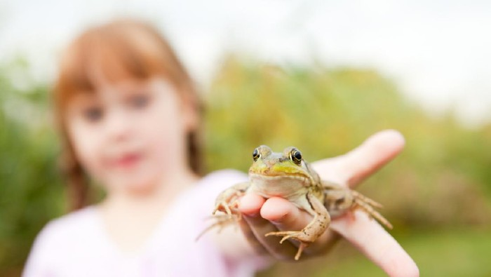 Color photo of a little princess girl holding out a green frog in her hand. If she kisses it, will it turn into a prince?
