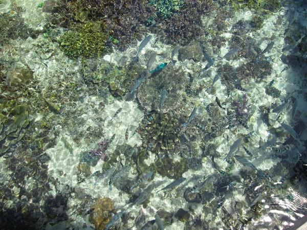 Tak hanya di laut, sasi juga berlaku untuk tanaman. Masyarakat tidak boleh sembarangan mengambil buah, sekalipun yang terjatuh dari pohon.