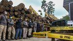 Potret Tumpukan Ribuan Kayu Ilegal di Riau