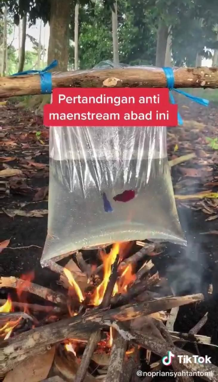 Duh! Adu Ikan Cupang di Atas Api yang Kalah Langsung Digoreng