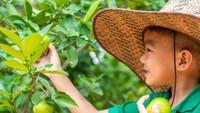 Menyatu dengan Alam, 3 Agrowisata Ini Cocok untuk Edukasi Anak