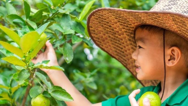 Menyatu dengan Alam, 3 Tempat Ini Cocok untuk Wisata Edukasi Anak