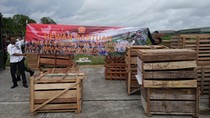 Panglima TNI Kirim 59 Ekor Babi ke Papua, Ikut Meriahkan Upacara Bakar Batu