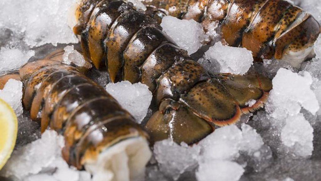 Usut Dugaan Monopoli Ekspor Benih Lobster, KPPU Panggil 40 Eksportir