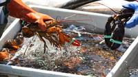 Lobster dari Semula Makanan Murahan Sampai Kini Berharga Tinggi!