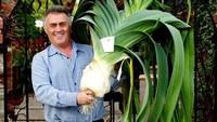 5 Sayuran dan Buah Terbesar di Dunia Ini Bikin Heboh