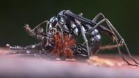 Seekor tawon berburu laba-laba di Yasuni, Ekuador. Foto karya Roberto García Roa.
