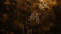 Sanne Govaert memotret tumbuhan jelatang yang mungkin terasa perih dan gatal jika Anda menyentuhnya, tetapi juga terlihat cantik.
