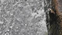 Pemenang lainnya ada gambar burung layang-layang besar kehitaman di atas batu di air terjun Iguazu di Argentina. Foto ini diambil oleh Pablo Javier Merlo, juara kategori siswa.