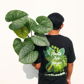 Dirga kolektor tanaman hias sultan