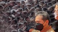 RI Ekspor Ikan Tuna ke Korsel