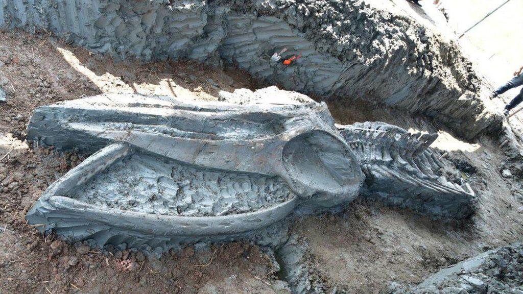 Fosil Paus Purba Berusia Ribuan Tahun Ditemukan di Thailand