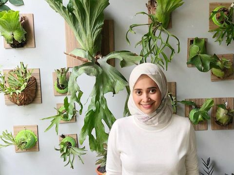 Nyonya Destira kolektor tanaman hias sultan