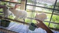 Dinas Ketahanan Pangan, Kelautan dan Pertanian (KPKP) DKI Jakarta membuka Taman Kelinci Bampu Apus.