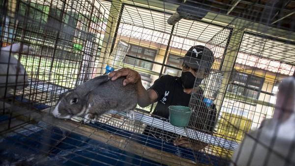 Di taman ini terdapat 188 ekor kelinci lho.
