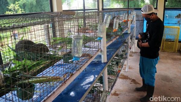 Taman ini merawat sekitar 188 kelinci.