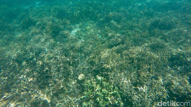 Taman Nasional (TN) Komodo terkenal akan wisata baharinya nan cantik. Ini bisa dilihat jika snorkeling di Long Beach.