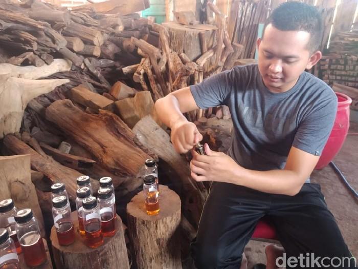 Minyak Gaharu Made In Jombang Tembus Pasar Ekspor
