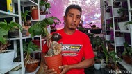 Pria di Ponorogo Ini Sukses Kembangkan Bonsai Kelapa Saat Pandemi