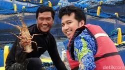 Lombok Bisa Jadi Pusat Budidaya Lobster Nasional, tapi..