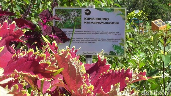 Selain menyuguhkan pemandangan alam dan spot swafoto, di obyek wisata ini juga bisa belajar mengenal beragam tanaman obat.