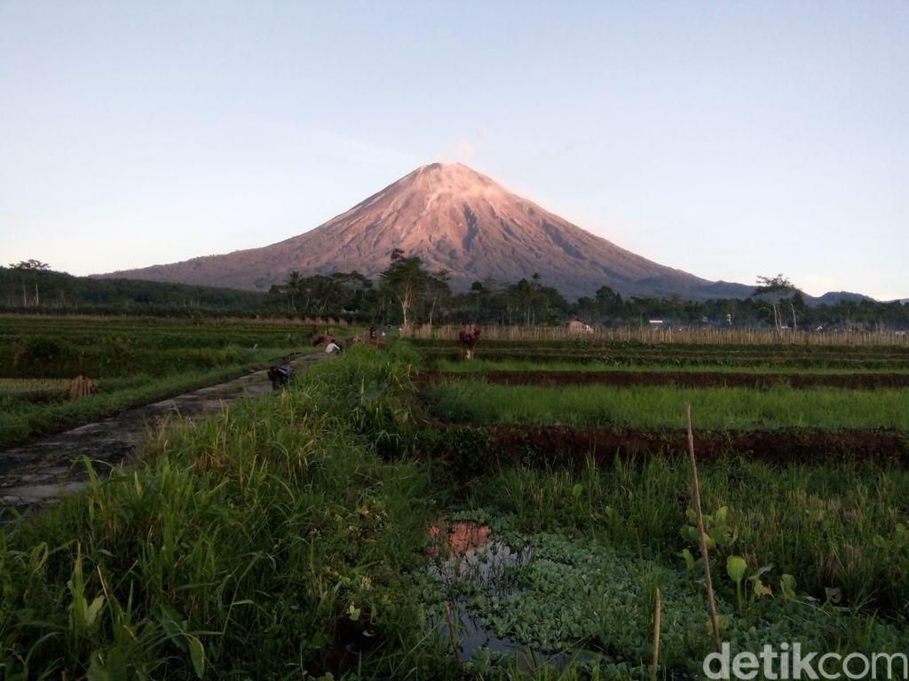 Gunung Semeru meluncurkan guguran lava pijar pada Sabtu (28/11). Yang teramati ada 13 kali dengan jarak luncur 500-1.000 meter dari puncak.