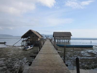 Mengenal Burung Khas Papua Lebih Dekat di Raja Ampat