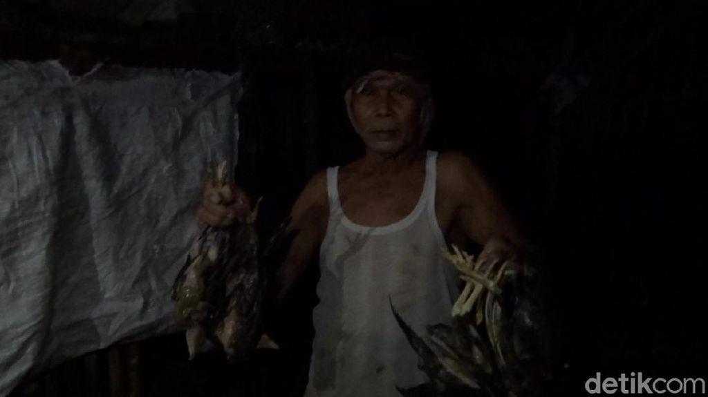 Banjir di Rembang, Ternak Ayam Mati hingga Sapi Terseret Arus