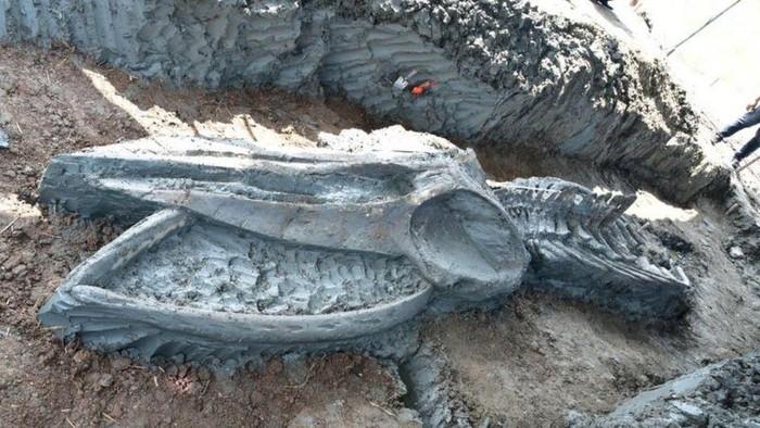 Fosil paus yang terjaga dalam kondisi hampir sempurna dan diperkirakan berumur 3.000 hingga 5.000 tahun telah ditemukan di Thailand. Tulang-belulang tersebut ditemukan pada awal November sejauh 12 kilometer lepas pantai sebelah barat ibu kota Thailand, Bangkok.