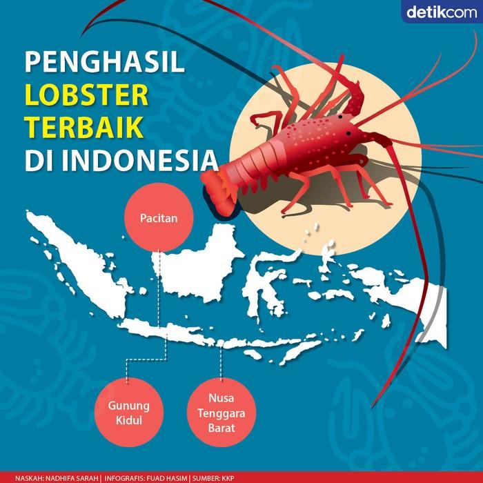 Infografis daftar daerah penghasil lobster