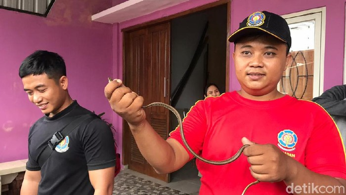 ular kisik