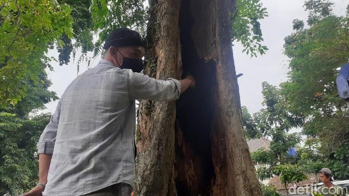 Heboh pohon di Kota Bandung mengeluarkan asap