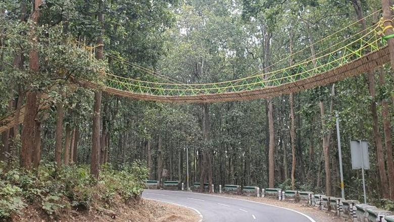 Jembatan khusus reptil