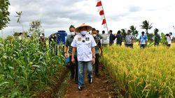 Panen Padi di Cianjur, Ketua MPR Bagikan Alsintan