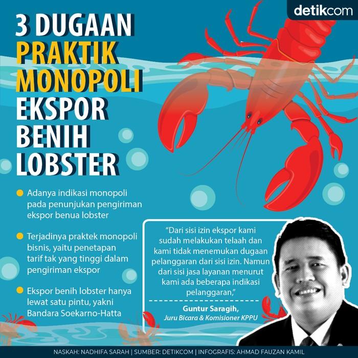 KPPU cium aroma monopoli dalam ekspor benih lobster