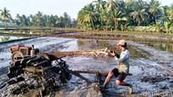 Petani Pangandaran Keluhkan Sulit Dapat Pupuk Bersubsidi