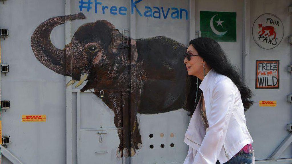 Gajah Paling Kesepian di Dunia Akhirnya Bertemu Spesies Sejenis